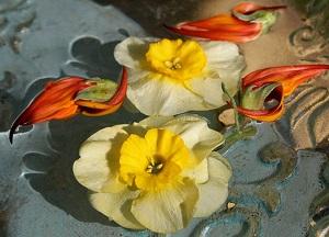 Daffodil_9x4_300dpi (1)